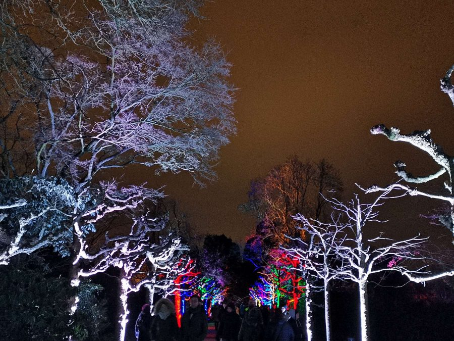 Landschaftsfotograf Essen - Allee der Lichter - Parkleuchten Grugapark Nachtaufnahme Lichtermeer Gruga