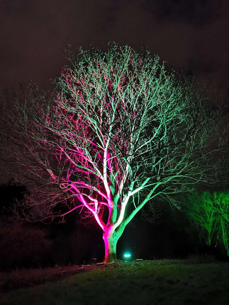 Fotograf Essen - Zwei Seiten verschmelzen zu einer Einheit - Parkleuchten Grugapark Gruga Stadt Essen Nachtaufnahme Baum Kontraste Naturverbundheit