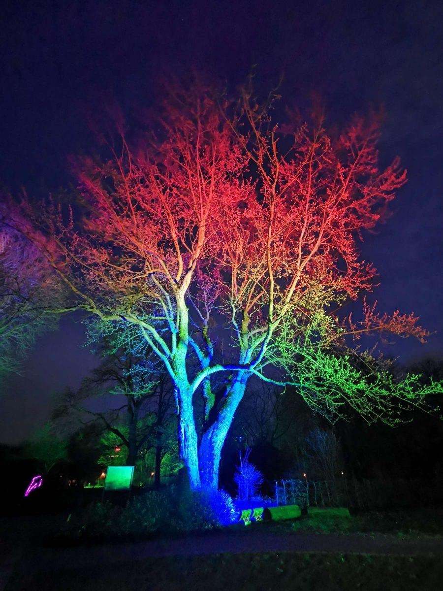 Fotograf Essen - Lebensbaum: Phasen des Lichts - Parkleuchten Grugapark Gruga Stadt Essen Nachtaufnahme Baum Lichtermeer Kontraste bunt Naturverbundenheit
