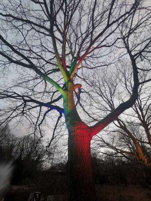 Fotograf Essen - Baum der Farben - Parkleuchten Grugapark Gruga Stadt Essen Baum Naturverbundheit