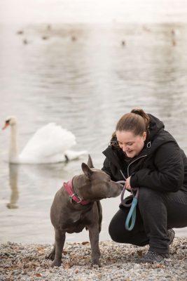 Hübsche Frau genießt ihre Freizeit in Konstanz mit Ihrem Hund. Im Hintergrund beobachtet ein Schwan vom Wasser den Moment.