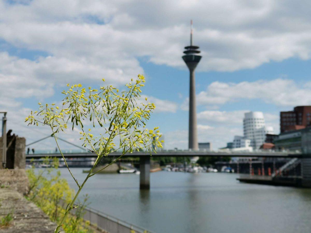 Medienhafen Düsseldorf im Frühling 2019. Fotografiert mit einem Huawei Mate Pro 20