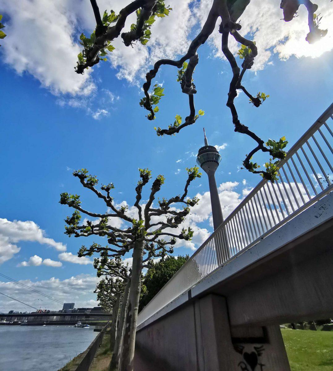 Frühlingshafte Impression des Rheintorturms am Rheinufer in Düsseldorf