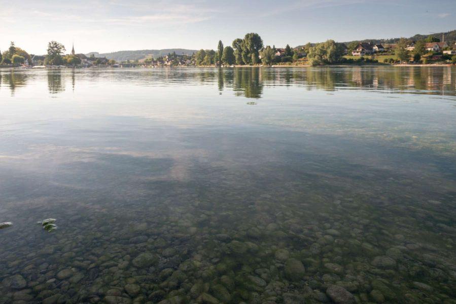 fotograf stein am rhein steine wasser rhein sommer morgens erfrischung natur stadt tiefenunschärfe fotografie