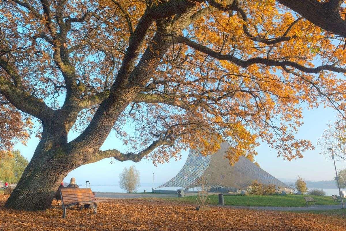 Ein Platz zum Verweilen - eine in Herbstlaub gesäumte Parkbank mit Blick auf Konzertsegel und Bodensee